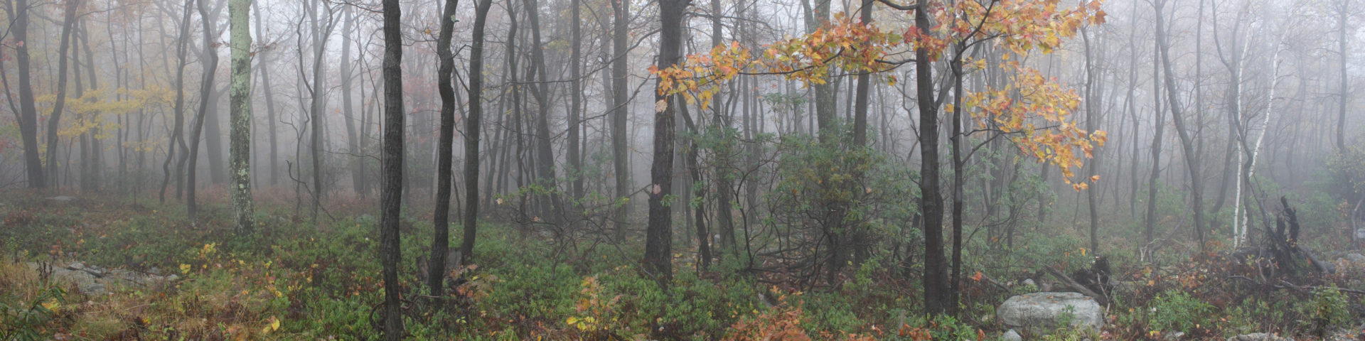 foggy_woods
